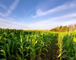 农场补贴调查