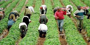 Immigrant Laborers Poll