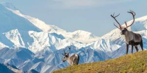 Alaska Vahşi Yaşam Sığınağı Anketi